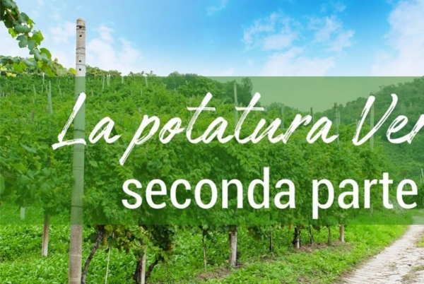 la potatura verde: parte seconda